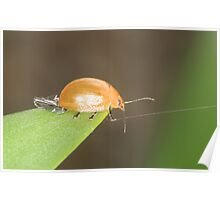 Tight rope walking lady bug Poster