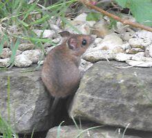 little field mouse by cjdec