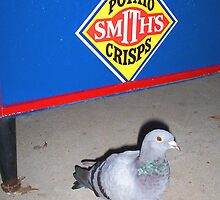 Pigeon By The Vending Machine by Robert Phillips