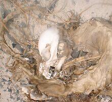 Quokka Skeleton by Robert Phillips