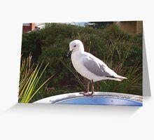 Garbage Bin Seagull Greeting Card