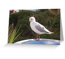 Garbage Bin Seagull Greeting Card