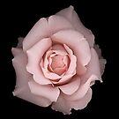 Pink Romance by Oscar Gutierrez