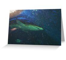 Shark One Greeting Card