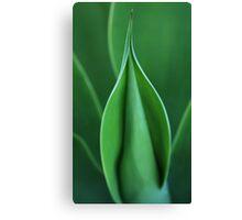 spiky plant Canvas Print