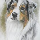Australian Shepherd by BarbBarcikKeith