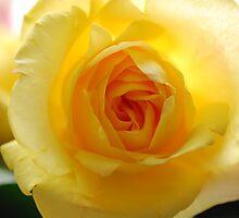 yellow mellow  by amrita125