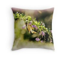 Eastern Spinebill, FNQ, Australia Throw Pillow