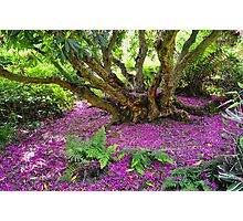Fairy Dell at Lost Gardens Of Heligan Photographic Print