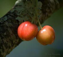 The Cherry Tree by Karen Boyd