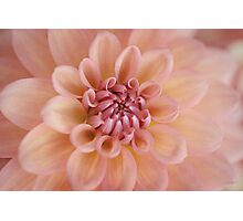 Soft Peach Photographic Print