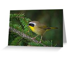 Common Yellowthroat Warbler Greeting Card