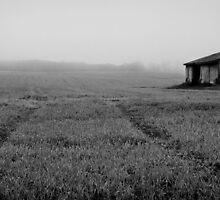 Mist morning rain by Erin Fitzgibbon