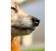 Grey but Dignified Pooch Photographic Print