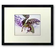 Constellation with a sprinkle of reality Framed Print