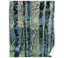 LICHEN AND MOSS ON TREES Poster