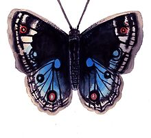 Butterfly Series 04 by Jazmine Phillips