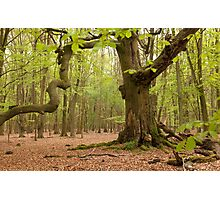 woodlands england Photographic Print