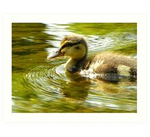 Lone Duckling-River Nidd, Knaresborough, North Y'shire Art Print
