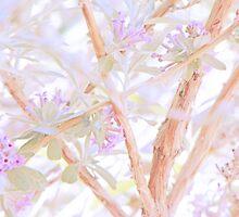Delicate Fan by Lenore Senior