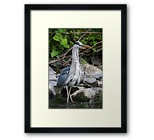 Poofy Neck! Framed Print