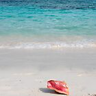 bahamas beach shell by milena boeva
