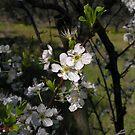 springflowers by mandalamaker