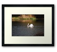 Graceful Swan on the Lake - Kentish Conservation Area Framed Print