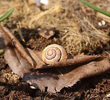 Snail on the Leaf by RosiLorz