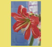 Tania's Happy Hippy plants - Hippeastrum One Piece - Short Sleeve