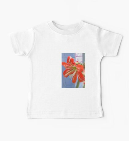 Tania's Happy Hippy plants - Hippeastrum Baby Tee