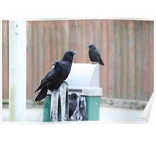Ravens on the Level Poster