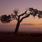 """""""Rural Mist At Sunrise"""" by Heather Thorning"""