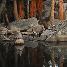 Dawn Reflection - Mokulmne Wilderness, CA by Aaron Minnick