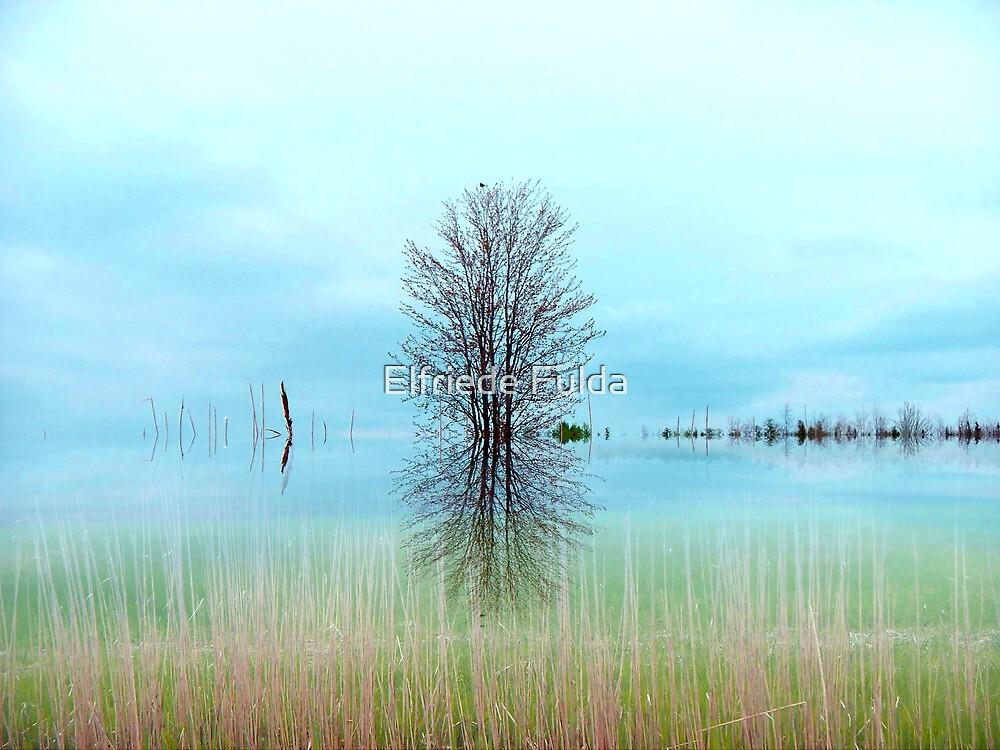 The Marsh ! by Elfriede Fulda
