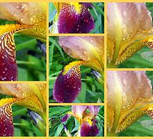 Irises' Bits and Pieces by Debbie Meyers