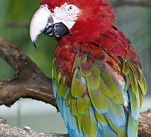 Portrait of a Parrot by Austin Weaver