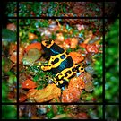 Poison Frog by lost-remains