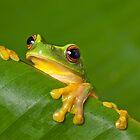 Peek-a-frog by Johan Larson