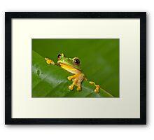 Peek-a-frog Framed Print
