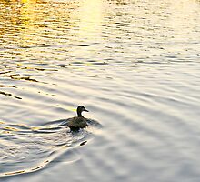 The lonely duck (one of Ululah's own) by bubblesron