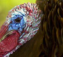 Portrait of a Turkey by Austin Weaver