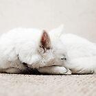 Sleeping by Tony Yu