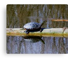 Painted turtle in the sun Canvas Print