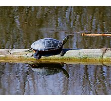 Painted turtle in the sun Photographic Print