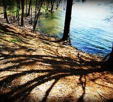 April Shadows by Jennifer Rhoades