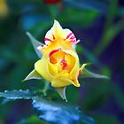 Yellow rose -Pink highlights by MarthaBurns