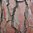pine bark by Paul Birch