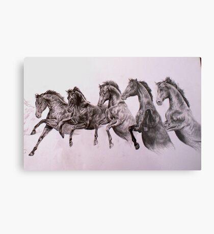 Equine, Engineered Metal Print
