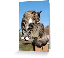 Tabby cat cleaning fur Greeting Card